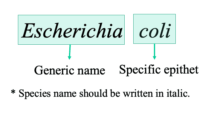 Bacterial Nomenclature 101 and How to Describe a New Species